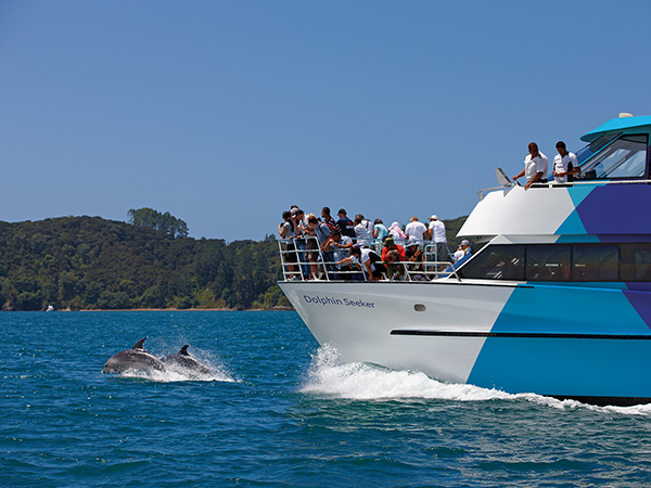 Dolphin watching cruise