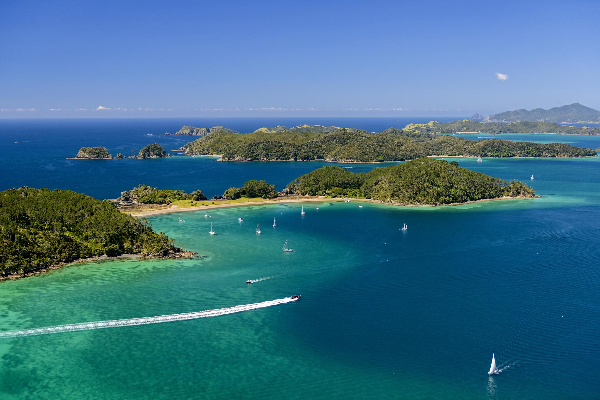 Bay Of Islands New Zealand Wildlife